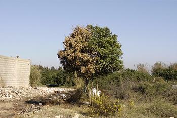 3-Atlal---algerie